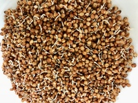 Organic Sprouted Sorghum